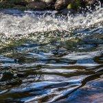 朱淑娟專欄:廢水回收再利用,因應未來缺水危機