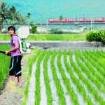 悲慘的「共有小地主」?重探共有耕地和地主的組成與博弈:對徐世榮台灣農村土改論述的批判總綱(3)