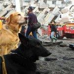 大地震》嚇到腿軟?英勇負傷!媒體報導誤解搜救犬 愛狗人士打抱不平