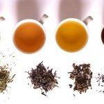 許怡先談生普:普洱茶在臺灣的過去、現在、未來