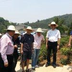 許怡先談生普:國際級生態畫家楊恩生,走進普洱古茶山了!
