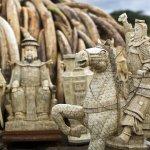 販賣象牙來保護大象?非象牙主產國的大象保衛戰