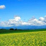 北海道自由行,自己排也行》這些觀光景點沒去,別說你到過北海道