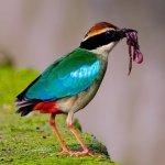 昔「八色鳥的故鄉」 雲林湖山水庫今起供水