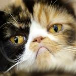 就算貓再會忍,貓奴都可以從肉眼發現的5種常見皮膚病