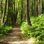 龍貓森林消失危機!日人奉獻半世紀買39塊地:讓孩子繼續相信森林裡有龍貓