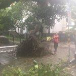 颱風強度未受破壞 入夜陣風可逾10級