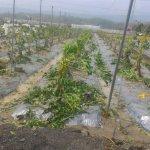 高雄農損初估1.65億元 3人受困土石流持續搶救中