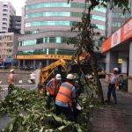 事先維護有效啦,蘇迪勒造成北市2萬株樹受損,梅姬初估5500株