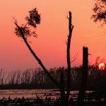 全世界最大的紅樹林保育區要蓋燃煤發電廠 嚴重威脅江豚、孟加拉虎生存