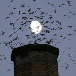 鳥類滿天飛翔,為什麼不會相撞?澳洲研究證實原因無比簡單……