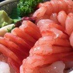 日本料理中常見的5種蝦子!其中,這款數量持續減少,越來越稀有…