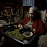美國11月8日要選總統、選國會……還要HIGH一下!8個州將表決大麻合法化