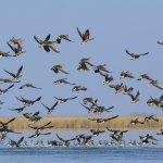 禽流感疫情嚴峻 防檢局要求養禽業落實防疫