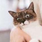 你對朝夕相處的寵物真的了解嗎?專家:動物快樂或難過,或許只是擬人的幻想…