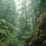 你有多久沒有接近大自然了?世界上這8個森林秘境,簡直像童話故事的場景啊!