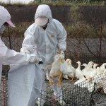 台商搶救無效!第二例H7N9死亡個案
