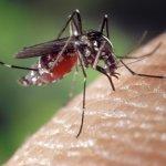 被蚊蟲叮咬抓一抓、不癢就好了?感染科主任:被「這種蟲」咬,死亡率達6成
