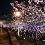 越夜越美麗 暢遊內湖樂活公園賞櫻步道 公園處為你點上32盞燈
