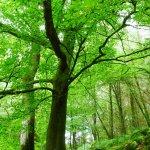 經濟發展與環境效益可以共存?你所不知道的碳交易