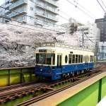 在東京搭都電賞櫻 藍色復古櫻花號限期行駛
