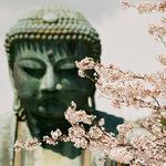 快筆記!距東京只要1小時,鎌倉10處「寺院」賞櫻名所,邊漫步邊享受懷舊和風情懷