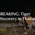 泰國叢林拍到瀕絕印度支那母虎帶小虎 保育燃希望