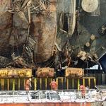 不是人骨!世越號打撈現場發現的骨骼恐是豬骨