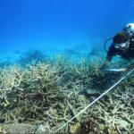 澳洲大堡礁正在步入死亡!連2年大規模白化 科學家沈痛控訴:完全沒時間復元!