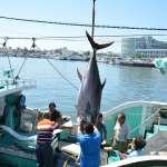 鮪魚變黃金!台灣鮪魚捕撈量世界第一 年出口達208億元