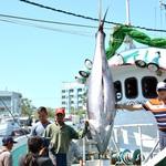哇賽!屏東「第一鮪」超過230公斤 東港魚市24日開賣