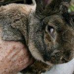 聯合航空又闖禍!載送巨兔卻讓兔兔在機上離奇身亡