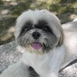 讀者投書:每次去摸可愛的狗狗,都會被牠兇?這6個祕訣,讓你變得狗見狗愛!
