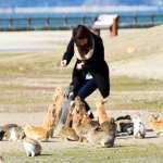 廣島「兔子島」遊客倍增 為求環境觀光並存部分區域禁止餵食
