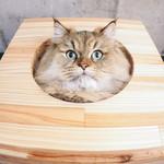 貓咪用額頭頂主人代表什麼?行為專家揭露超暖心真相,別再嫌牠們愛理不理啦!