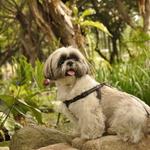 讀者投書:為何狗狗出門喜歡聞糞便、滾泥巴?其實這是天性,主人不必大驚小怪