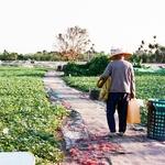 為何一堆上班族瘋農耕課?原來看著植物一天一天成長,獲得的正能量超乎想像