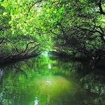 台南四草只有「綠色隧道」值得去嗎?周邊6處美麗秘境全公開,整區都太舒服啦!