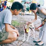 努力辦活動但沒什麼人參與,品種犬卻一則PO文搶破頭,她沉痛道出米克斯送養的艱辛