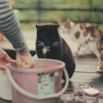 愛上台灣喵星人,陸生拍片紀錄「貓咪天堂」猴硐的美麗與哀愁...