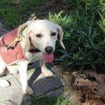 防治樹木得癌症,屏東縣政府請出米格魯偵測檢疫犬