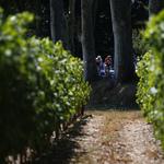 春寒料峭,寒害嚴重 法國葡萄產量將創新低