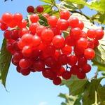 得泌尿道感染,約30%人在半年內會復發!想預防可多吃蔓越莓,但「這2種人」不適合