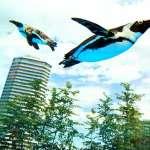 空中飛舞的企鵝?水族館全球首創展示超吸睛