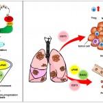 探索抑癌蛋白如何改變腫瘤細胞環境 中研院開創抗癌策略新契機