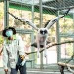 北市動物園褐林鴞「雪寶」 脫胎換骨成明日之星