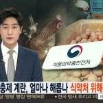 南韓也有毒雞蛋!全國52家養雞場超標 國民每月至少一顆下肚
