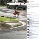 塊陶啊!德州颶風來襲 小狗逃命不忘叼狗糧