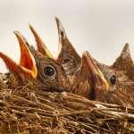 故意驚擾鳥類嚇飛牠們、剪掉鳥巢周圍來拍小鳥…他沉痛控訴拍鳥者為攝影做出的惡行