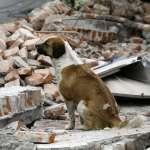 墨西哥大地震》慘!「災區像是遭到轟炸」至少61人罹難 沿岸出現海嘯